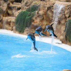 Delfíni v Loro Parque