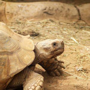 Želva v Loro Parque
