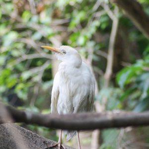 Papoušek v Loro Parque