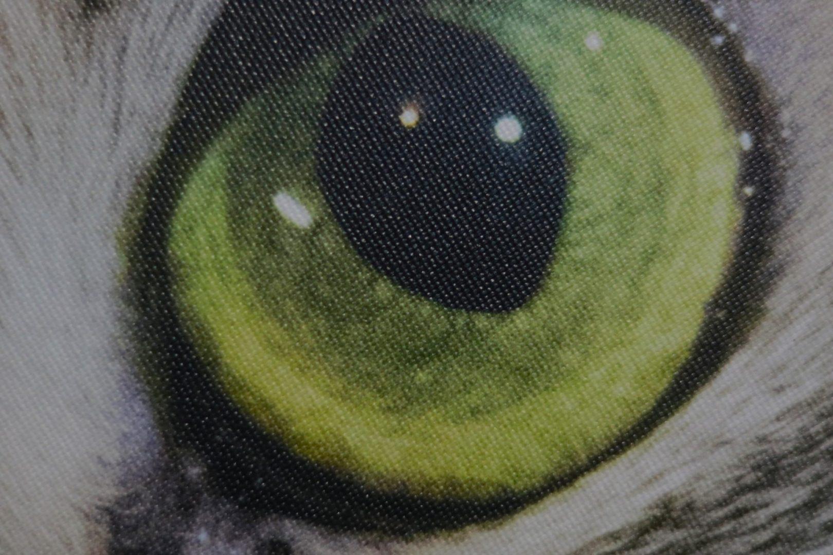 Hodnocení obrazu od Saal Digital *****