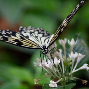 Motýl v pavilonu filipín ZOO Plzeň