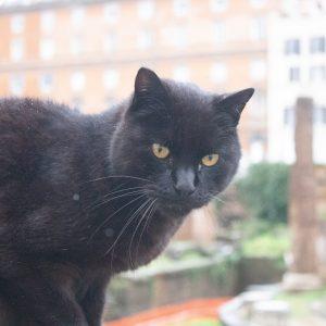 Kočičí svatyně Řím