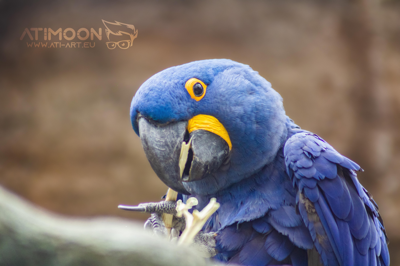 Ptačí odpoledne v Plasech - galerie